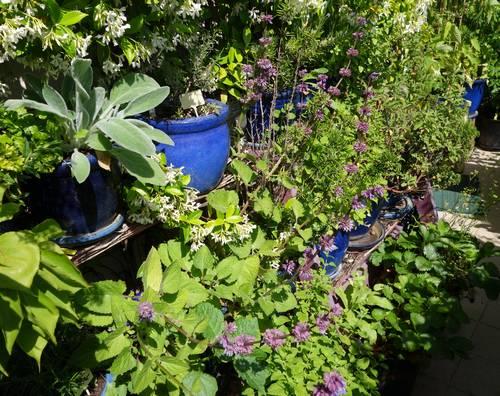 Placer les plantes aromatiques et médicinales en pot sur des étagères permet d'en cultiver un grand nombre en utilisant l'espace vertical du balcon - les plantes sont à portée de main pour la cuisine - Sarriette, menthes, romarin, laurier sauce, cyste, mélisse etc.