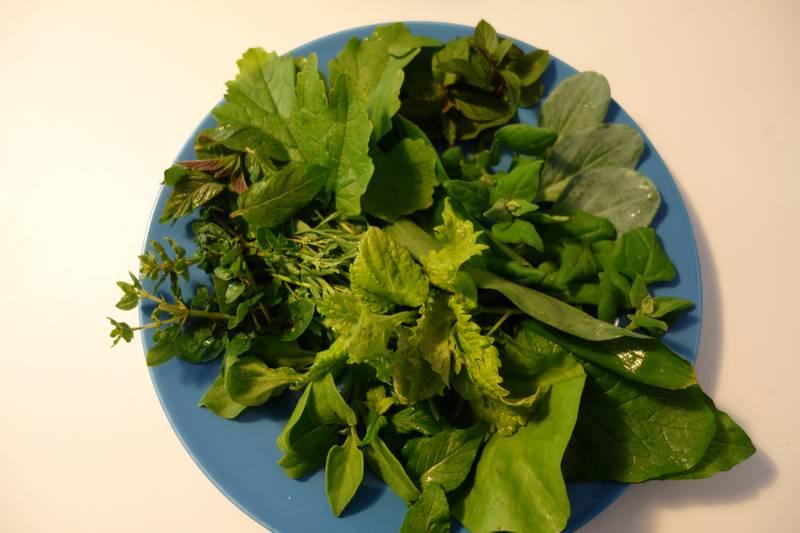 Salade de légumes du balcon : périlla de Nankin, mertensia maritima, chénopode bon Henri, menthe chocolat, menthe verte, ail des ours, chicorée sauvage, menthe orange, tétragone cornue, ficoïde glaciale