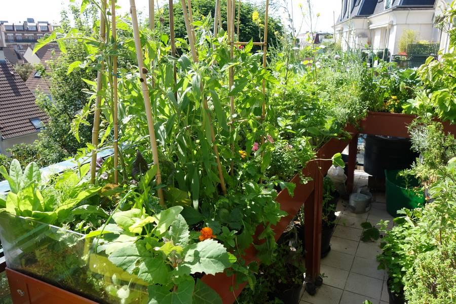 La densité élevée permet aux plantes de se protéger entre elles