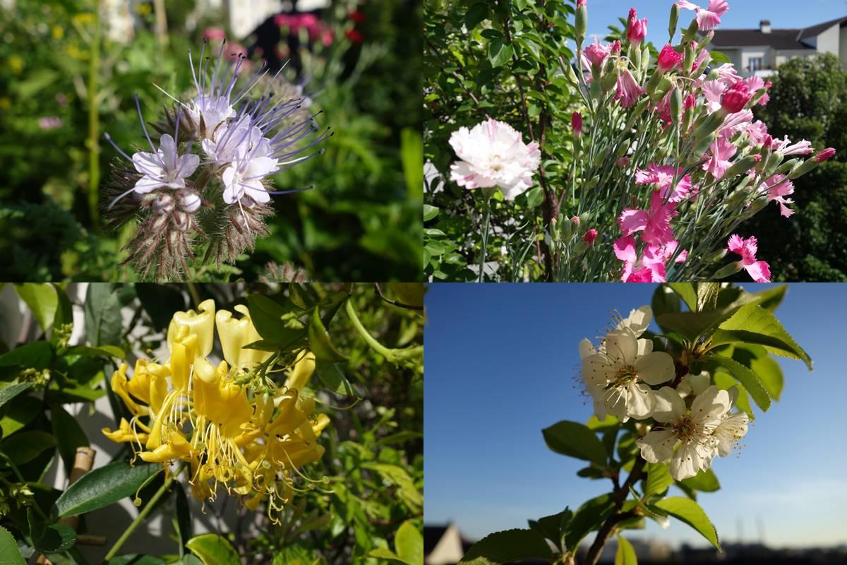 Fleurs_1