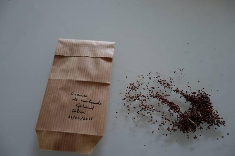 Les sachets en papier kraft sont pratiques car ils protègent les graines, avec une bonne aération