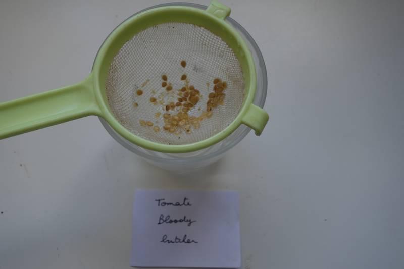 On laisse ensuite les graines sécher complètement (deux ou trois semaines), puis on peut les mettre dans des sachets kraft