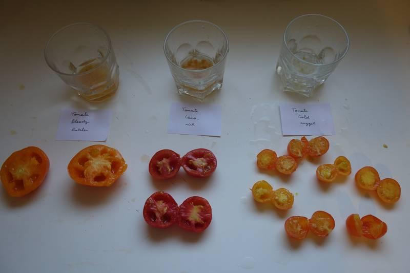 Les trois variétés de tomates avec les graines qui ont été récoltées et placées avec un peu d'eau dans des verres distincts