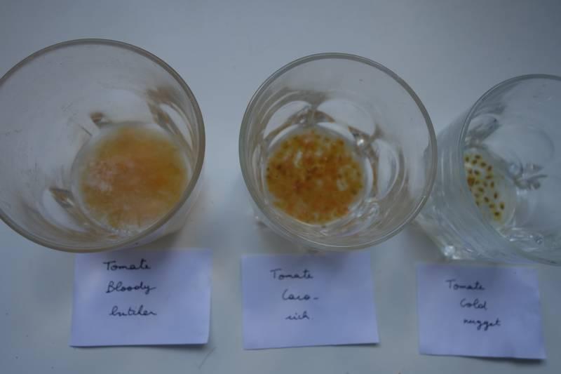 Les graines de tomate bloody-butcher sont prêtes à être rincées (une pellicule blanche s'est formée à la surface), pas les autres graines