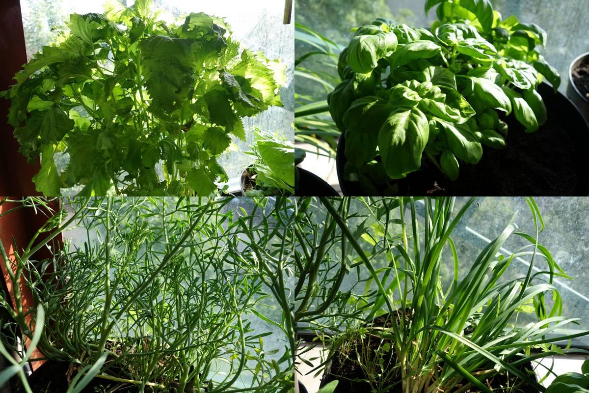 Legumes_varies_1
