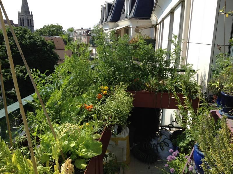 Les carottes jouent leur rôle de protection du vent et du soleil, derrière les laitues se développent parfaitement (comparer avec la situation la première année), à droite on peut voir le romarin et la ciboulette en fleurs