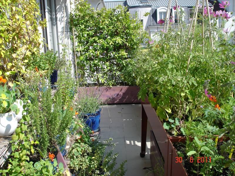 Le jasmin brise-vent a pris de l'ampleur (au fonds), la récolte de tomate est plus abondante, le romarin (à gauche) est en pleine forme
