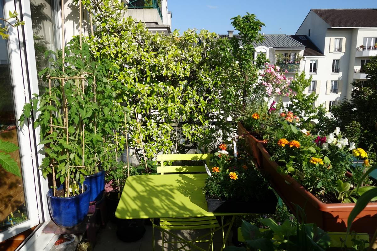 Vue_tomate_jardiniere