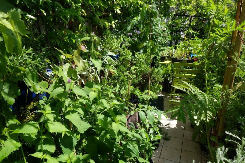 Au premier plan à gauche, l'agastache rugosa (odeur de menthe) est en fleurs. On voir aussi le ciste blanc (ou ladanifère)