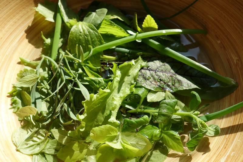 Légumes récoltés sur le balcon : basilic camphre,